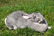 Free A Cute Funny Rabbit On A Grass Royalty Free Stock Photography - 19916107