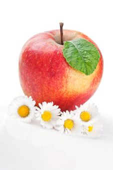 Red Apple And Flowers Stock Images