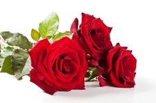 Free Red Roses Royalty Free Stock Image - 19916296