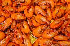 Fresh Shrimp Royalty Free Stock Image