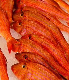 Red Mullet Fish Royalty Free Stock Photo