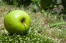 Fresh Apple On A Green Grass Royalty Free Stock Images