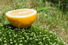 Free Fresh Lemon On A Green Grass Royalty Free Stock Photos - 19916608