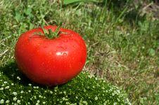 Free Fresh Tomato On A Green Grass Stock Image - 19916661
