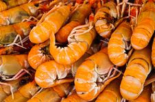 Free Fresh Large Prawn Stock Photography - 19916672