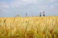 Free Yellow Wheat Field Stock Photo - 19917390