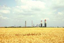 Free Yellow Wheat Field Stock Photo - 19917410