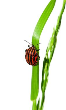 Free Bug Royalty Free Stock Image - 19917526