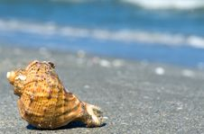 Free Shell In The Sand Royalty Free Stock Image - 19917696