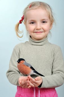 Free Little Girl And Bullfinch Stock Images - 19917774