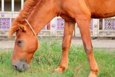 Free Mammal Livestock Horse Animal Brown Stock Photo - 199155160