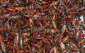 Free Live Crawfish Close Up Stock Image - 19926671