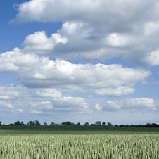 Free Green Field Of Wheat Royalty Free Stock Image - 19920036