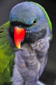 Free Parrot Stock Photos - 19920733