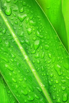 Free Water Drops On Plant Leaf Stock Images - 19921384