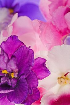 Free Background With Pink Violet Flowers Stock Photography - 19924572