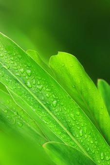 Free Water Drops On Plant Leaf Stock Photo - 19925450
