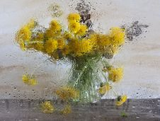 Free Dandelions After Glass Royalty Free Stock Image - 19926266