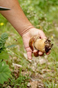 Free Grabbing A Mushroom Royalty Free Stock Images - 19926359