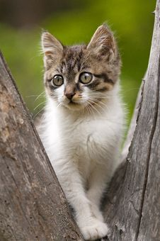 Free Kitten Royalty Free Stock Photography - 19927737