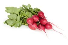 Free Fresh Radishes Royalty Free Stock Images - 19927889