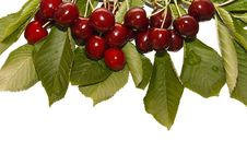 Free Red And Sweet Fresh Cherries Stock Images - 19927984