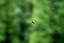 Free Spider And Cobweb Royalty Free Stock Image - 19928016