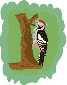 Free Woodpecker Stock Photography - 19928042