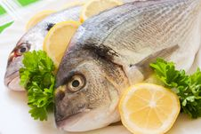 Gilt-head Bream Stock Images