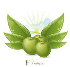 Free Green Apples And Leaves Against The Sunshine Royalty Free Stock Photography - 19928507