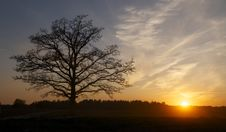 Free Sunset By The Tree Royalty Free Stock Photos - 19928868