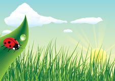 Free Ladybug Stock Images - 19928894