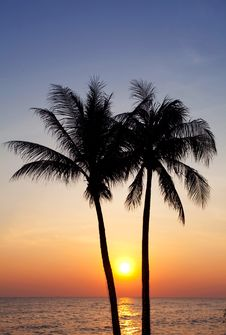 Free Palm Forest Stock Photography - 19929862