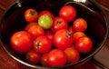 Free Tomato Stock Photos - 19935023
