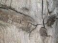 Free Wooden Texture. Stock Photo - 19935640