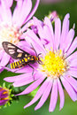 Free Nature Insect Pollination Stock Photo - 19936310