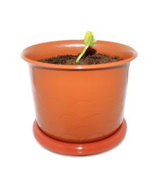 Free Green Sprout In The Flower Pot Royalty Free Stock Photo - 19930075