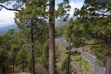 Free Curvy Mountain Road In La Palma Royalty Free Stock Photography - 19930077