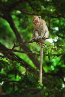 Free Monkey Stock Images - 19930524