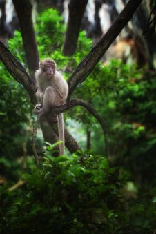 Free In Jungle Royalty Free Stock Photography - 19930717