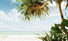 Free Tropic Beach Stock Images - 19930744