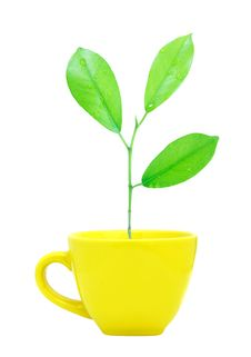 Free Trees Growing In A Cup Isolated Stock Photos - 19930813