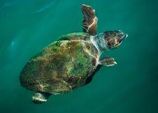 Free Green Sea Turtle Stock Photos - 19931573