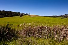 Free Countryside With Beautiful Green Field. Stock Photography - 19932082