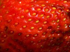Free Strawberry Royalty Free Stock Photos - 19932268