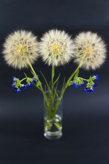 Free Beautiful Dandelions With Blue Wildflowers Stock Photos - 19933193