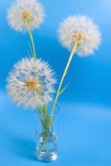Free Three Dandelions On The Blue Stock Photography - 19933292