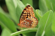 Free Orange Butterfly Stock Images - 19933534