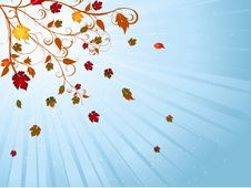 Free Autumn Leaves Royalty Free Stock Images - 19935389