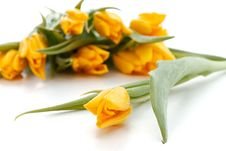 Free Yellow Spring Tulips Royalty Free Stock Image - 19935986
